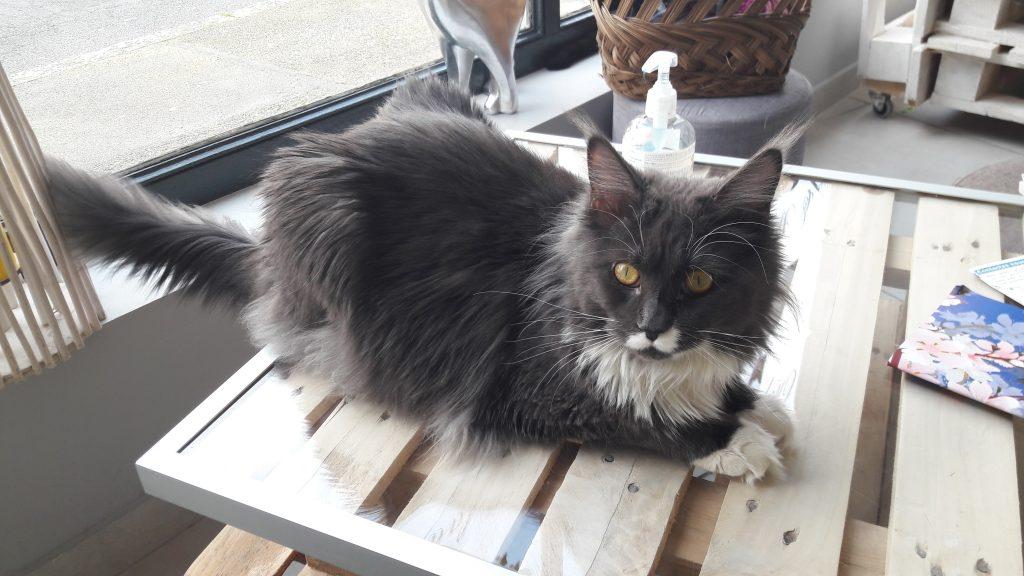 N'JOY - café des chats