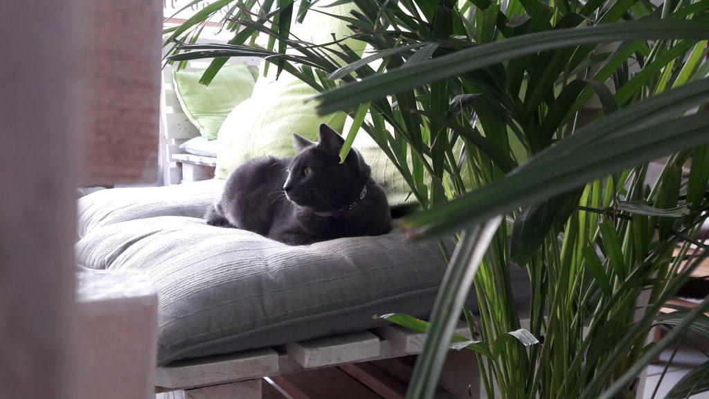 Bar à chat - Aix les bains - détente - relaxation