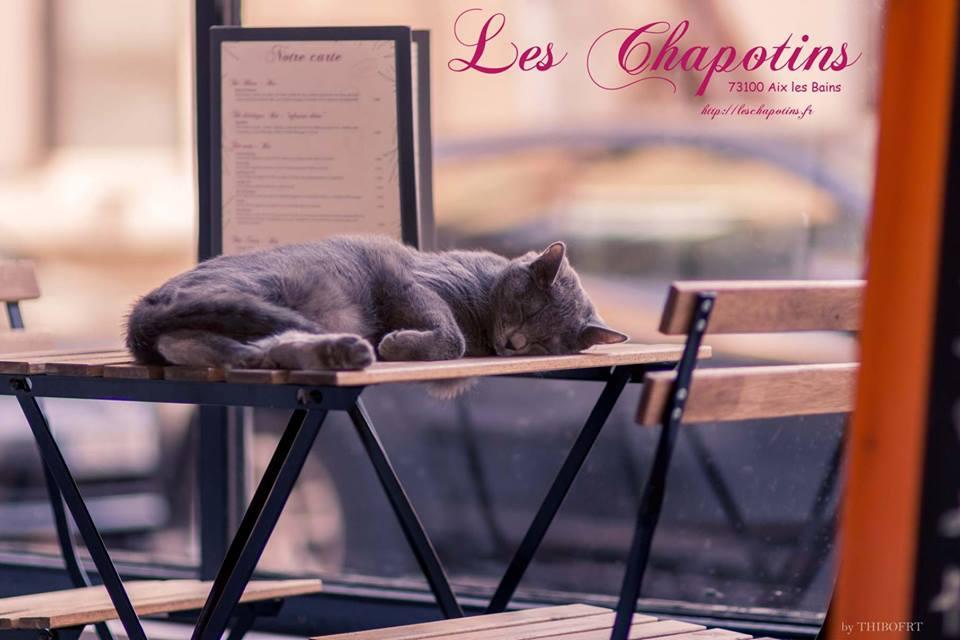 bar à chats - restaurant