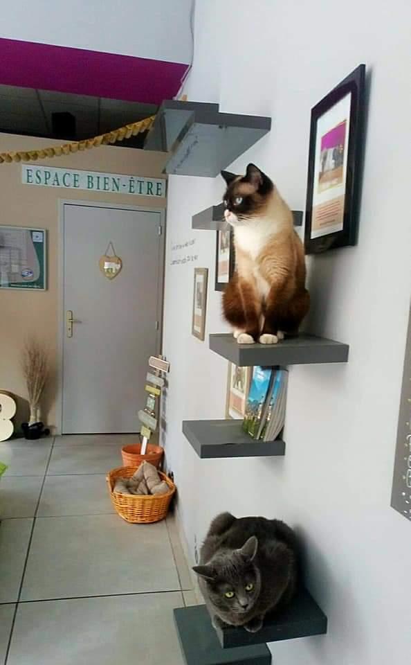 bien être - bar à chats
