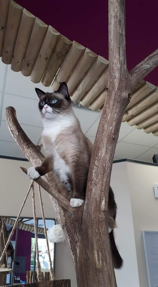 salon de thé - bar à chats
