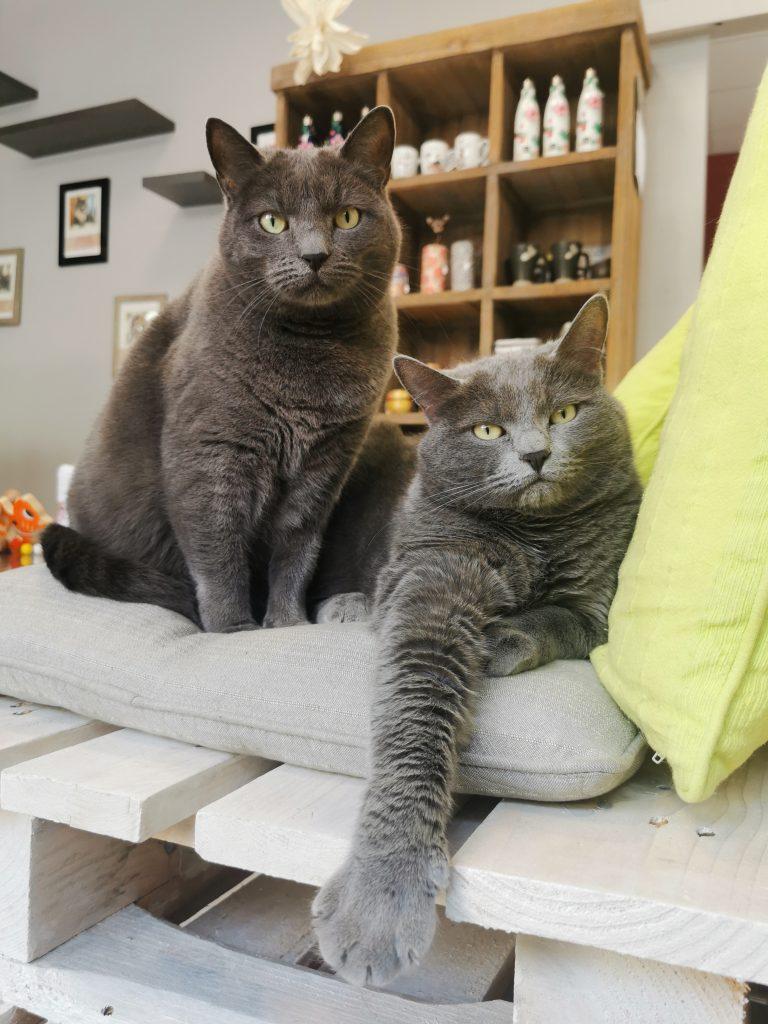 Mina et Mona - Les Chapotins