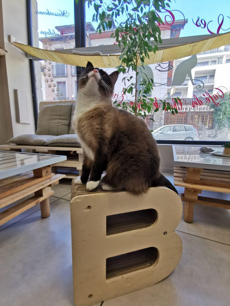 Bar à chat Aix les bains - Nelson